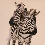 Day 52 – June 26th – Zebra